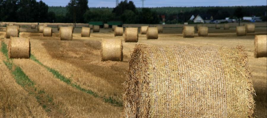Landwirtschaft-4-1.jpg