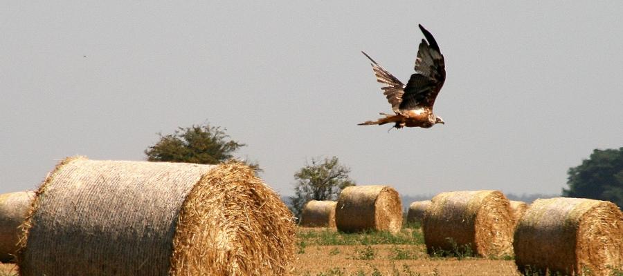 Landwirtschaft-7-1.jpg